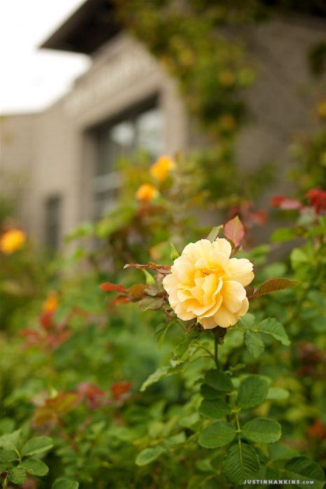 norfolk-botanical-garden-wedding-photography-016
