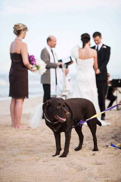 pet-friendly-weddings