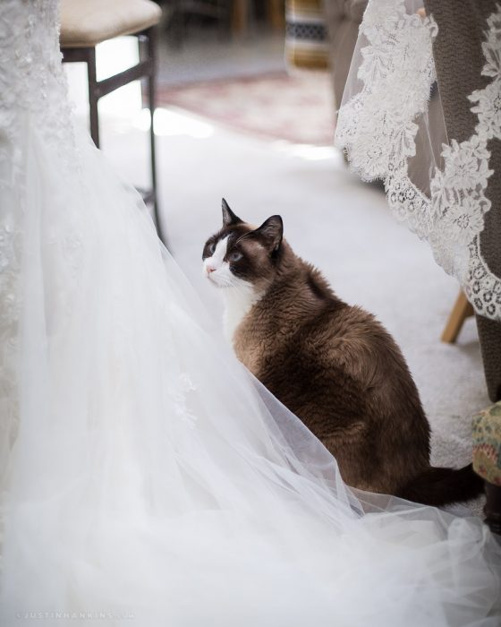 wedding-cat-photos
