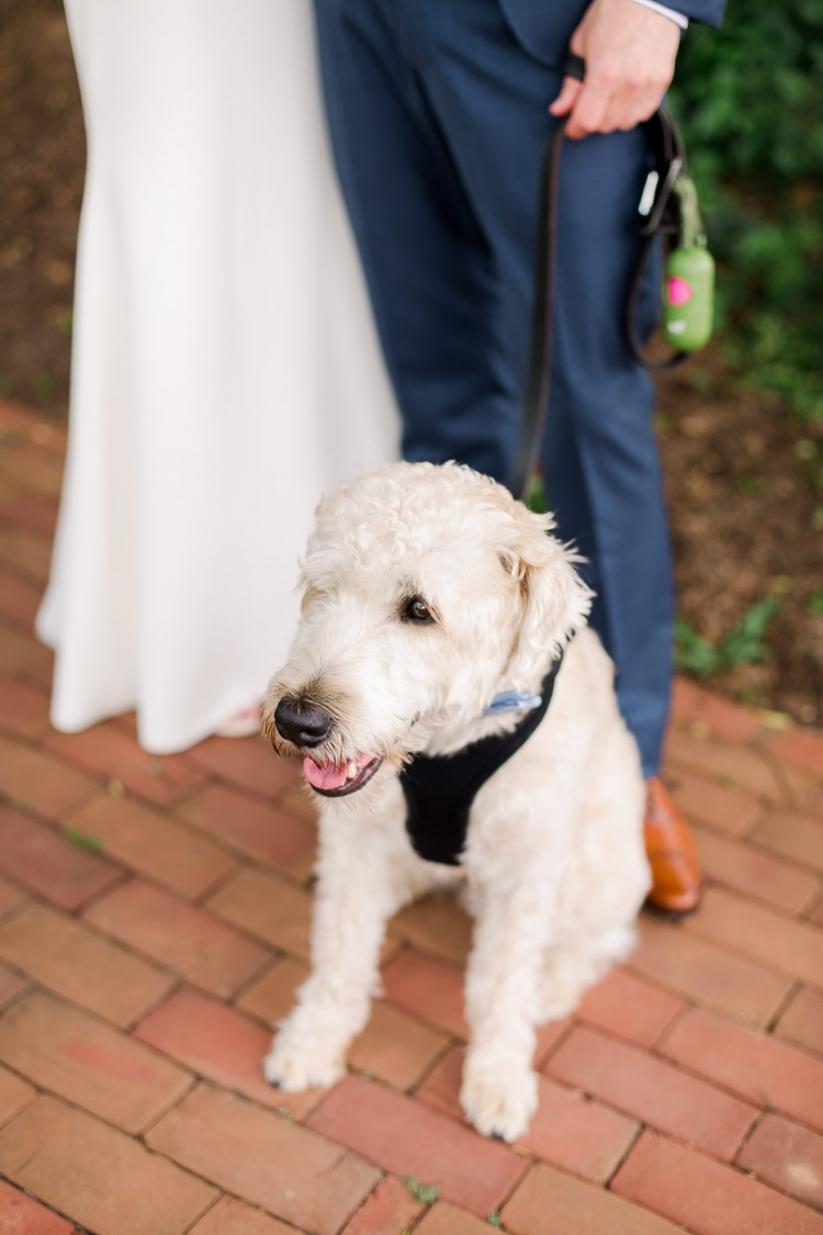 Pet Friendly Wedding in Charlottesville