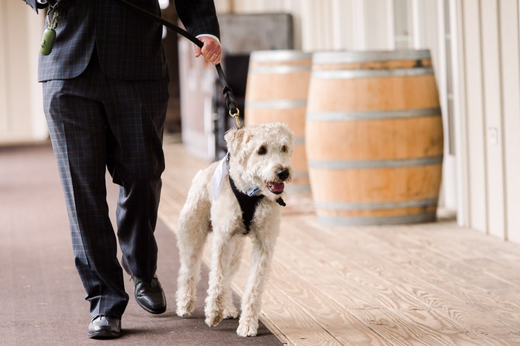 Using Your Dog as Your Ringbearer